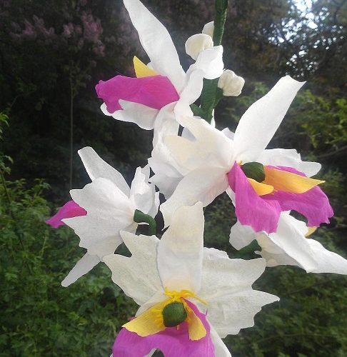 Papírorchidea